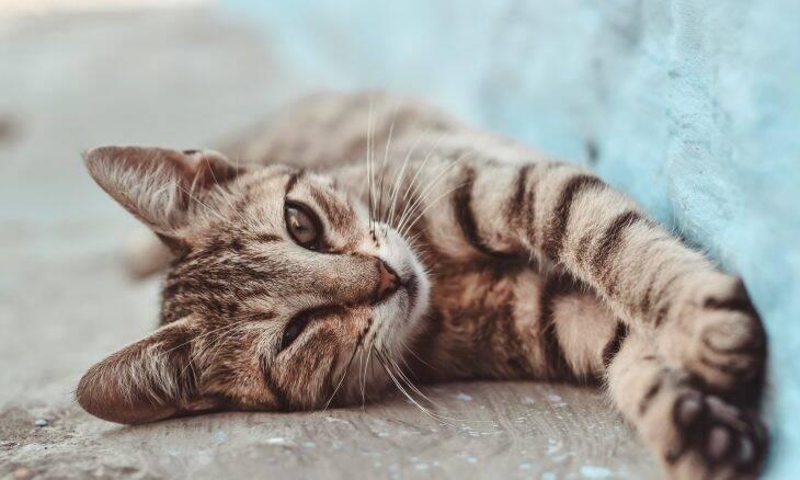 6 dicas para fazer a vida do seu gato muito mais feliz