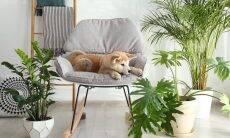 Primavera: confira as plantas que colocam em risco a saúde do seu pet