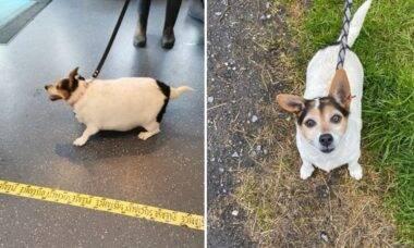 Impressionante: cadela perde metade do seu peso com dieta e caminhada