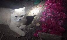 Vídeo: gato não se conforma com a morte do irmão e fica deitado ao lado da cova