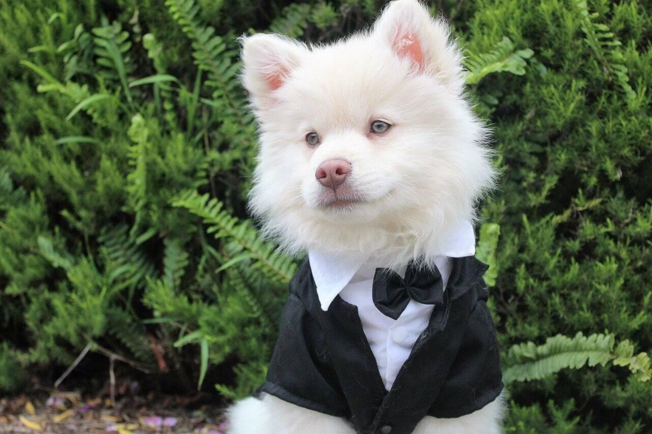 Cidade americana organiza casamento gigante de cães e tenta bater recorde mundial