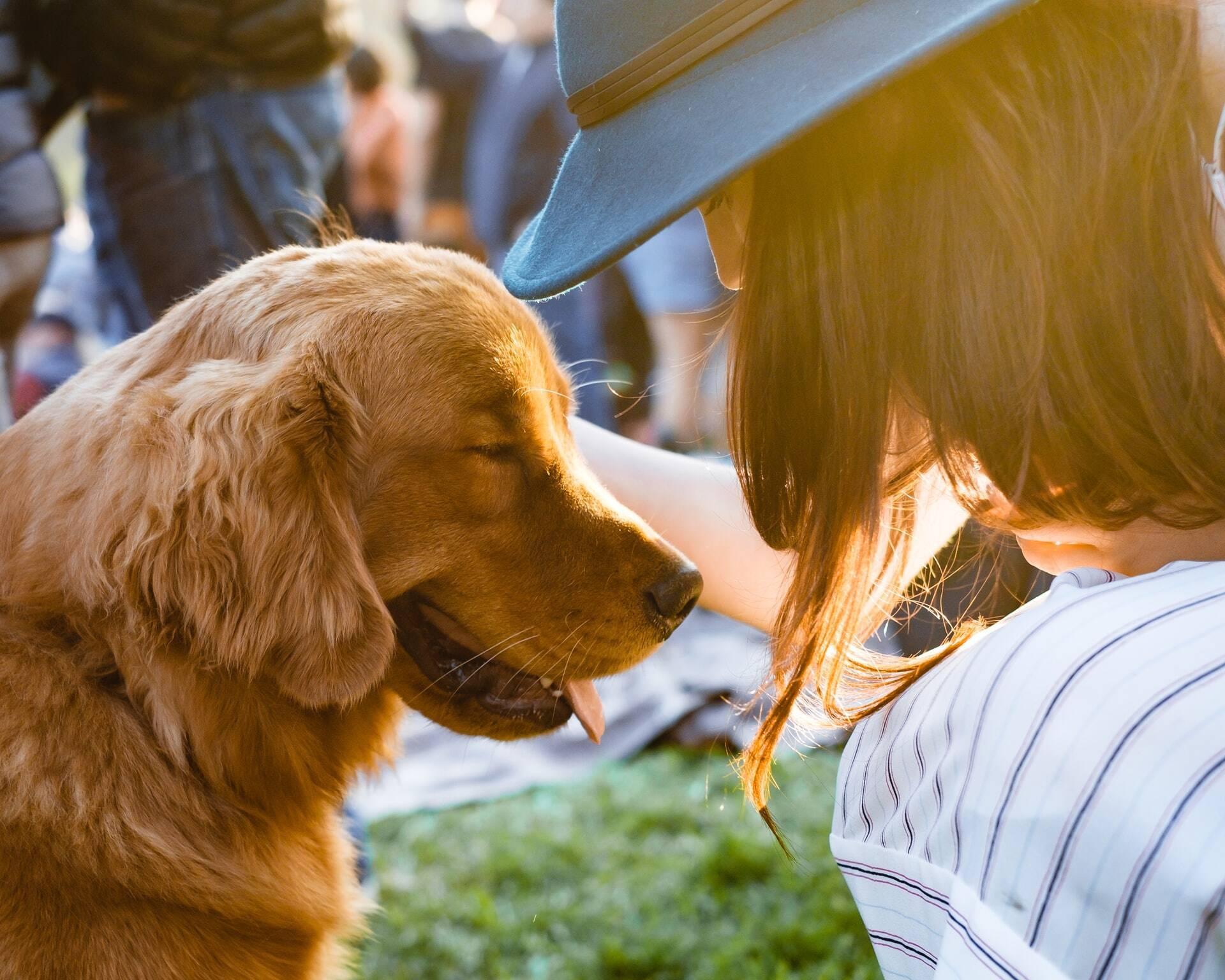 Cães reagem à voz dos donos como os bebês humanos quando ouvem as mães