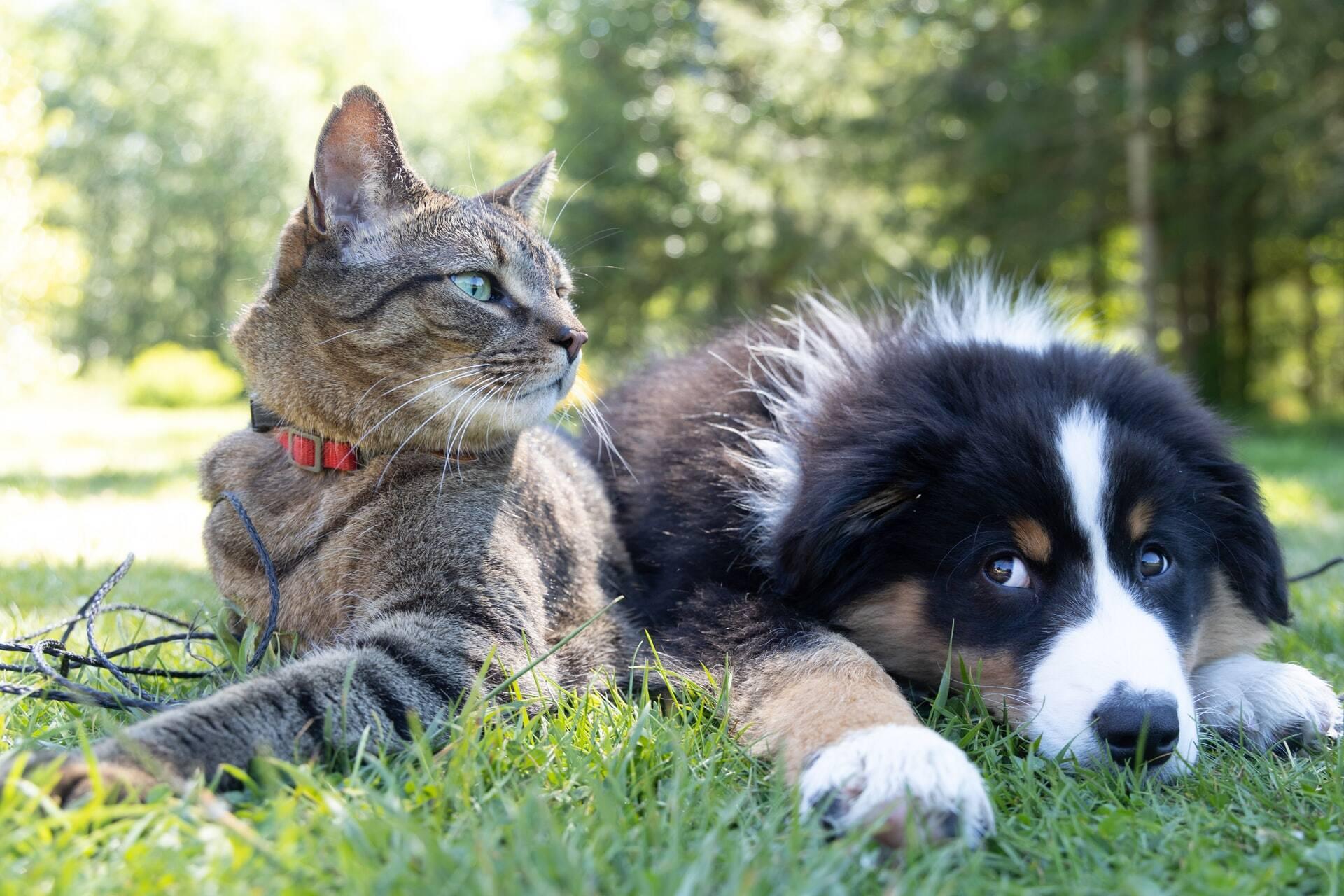 85% dos casos de demência em cães e gatos não são diagnosticados