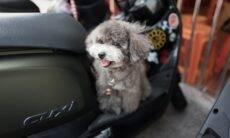 Dono reserva toda a classe executiva de avião para cachorrinho viajar com estilo