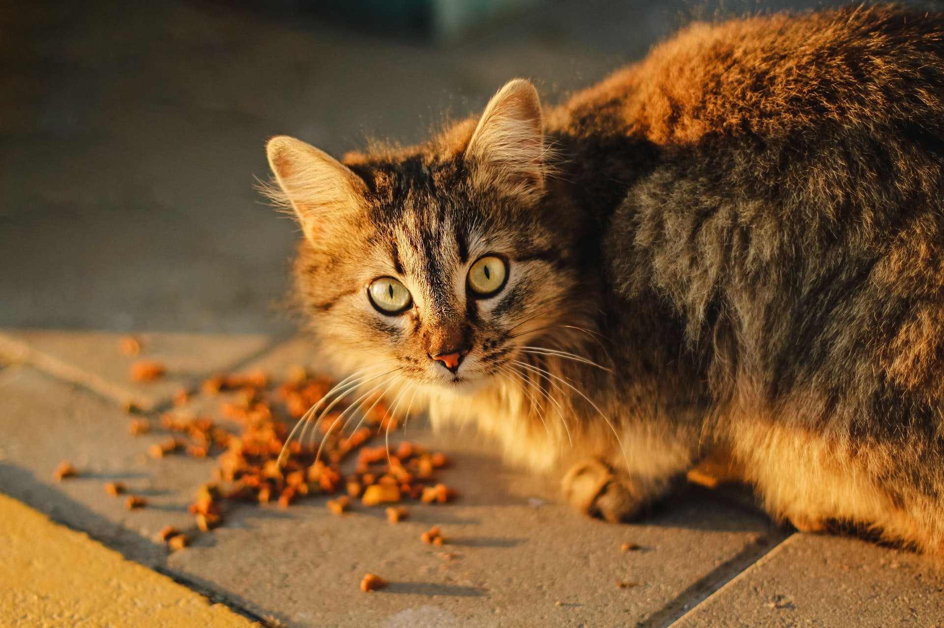 Após a morte de 330 gatos, fabricante de ração faz atualização de segurança