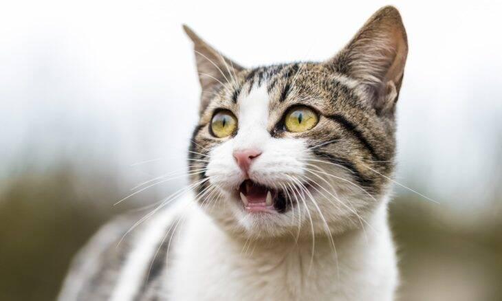 Por que a pandemia deixou alguns gatos estressados e como ajudá-los