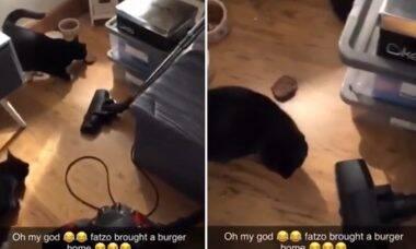 Vídeo: gato é pego em flagrante furtando hambúrguer do vizinho