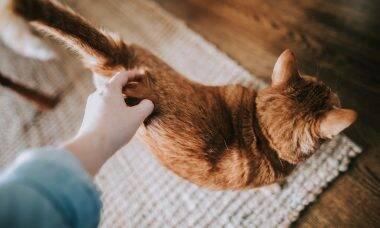 Por que gatos abanam os rabos? E o que eles estão tentando dizer quando fazem isso