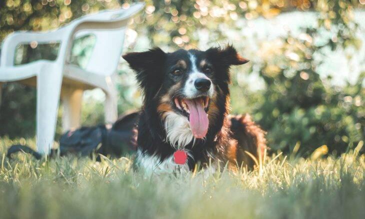 Cão nasce cego, e donos só percebem quando ele chega aos 7 anos