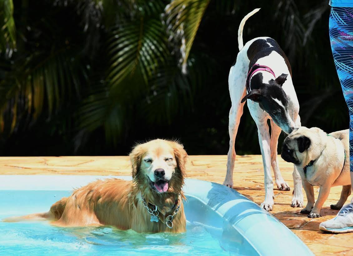 Confira os benefícios da socialização para a saúde física e mental do seu cão