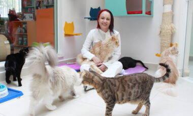 Veja os benefícios do atendimento especializado para a saúde do seu gato