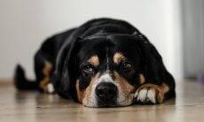 De cortar o coração: as palavras finais de veterinários que tiveram de abater 5 cães saudáveis