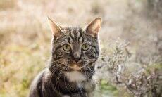 Preocupada com a sede excessiva do seu gato, dona descobre que o bichano curte uma pimenta