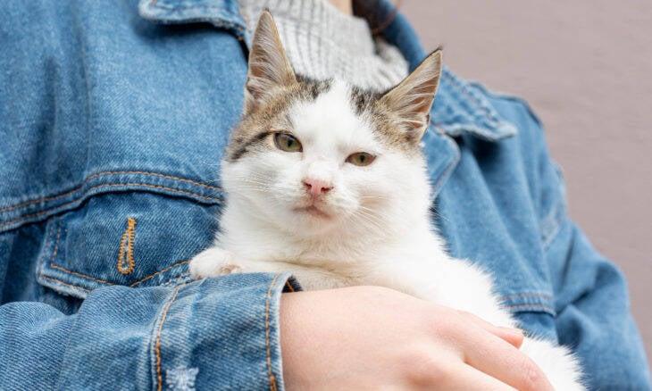 Ciência ensina o jeito certo de se comunicar com o seu gato