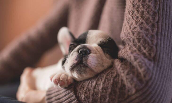 Se o seu cão escolheu outra pessoa da família como sua favorita, não se sinta rejeitado