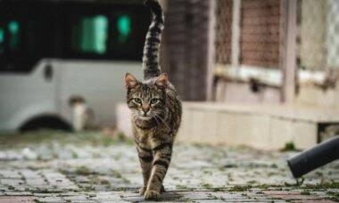 Maioria dos gatos de rua morre antes de completar um ano; como salvá-los?