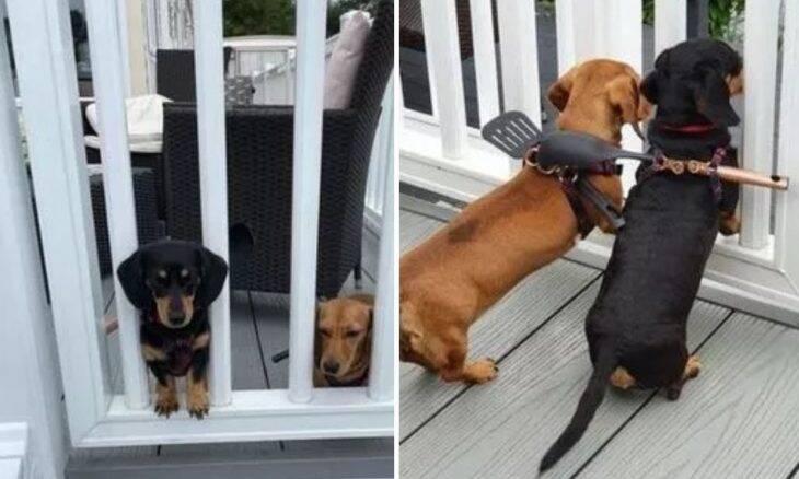 Dono adota solução criativa para impedir fuga de seus cãezinhos e viraliza