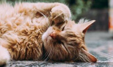 Pesquisa gigantesca levanta 7 traços de personalidade dos gatos