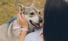 5 dicas para proteger você e seu cão contra a raiva