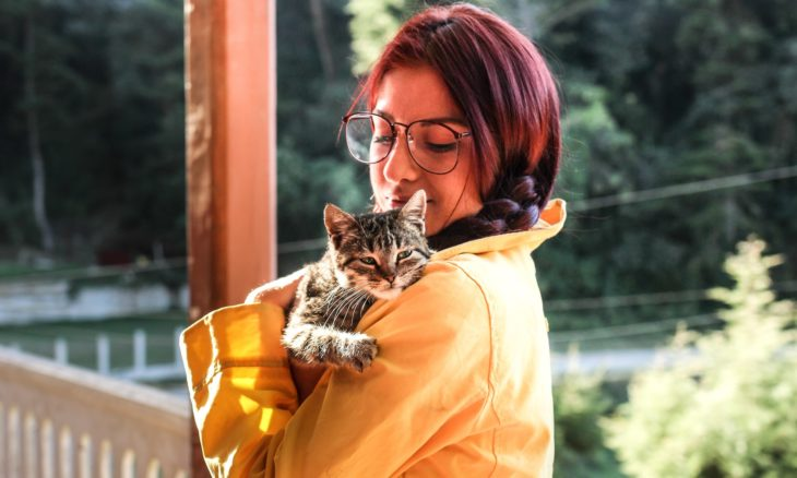 Gatos sabem dizer 'eu te amo', mas do jeito deles