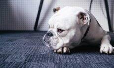 Clínica veterinária viraliza com o carinho na despedida de cães que precisam ser sacrificados