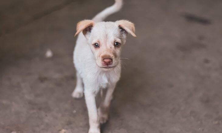 Manual gratuito mostra o que fazer quando você encontrar um cão abandonado