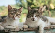Como os gatos 'conversam' entre si e as mensagens que mandam para humanos