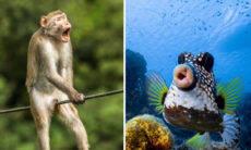 Imagens hilárias: concurso elege a mais engraçada foto de animais