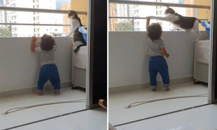 Vídeo: gato viraliza ao proteger criança que tenta subir em varanda de um prédio