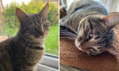Donos reencontram gato a 183 km de casa e suspeitam que ele pegou um trem