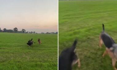 Vídeo: cães empolgados correm na direção da dona e a jogam longe