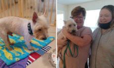 Após quase um ano de sumiço, dona reencontra cão... no Facebook!