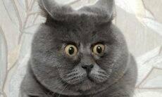 Gato permanentemente assustado encanta e amedronta a internet