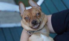 Cão de abrigo está sempre sorrindo, mas não é por uma boa razão