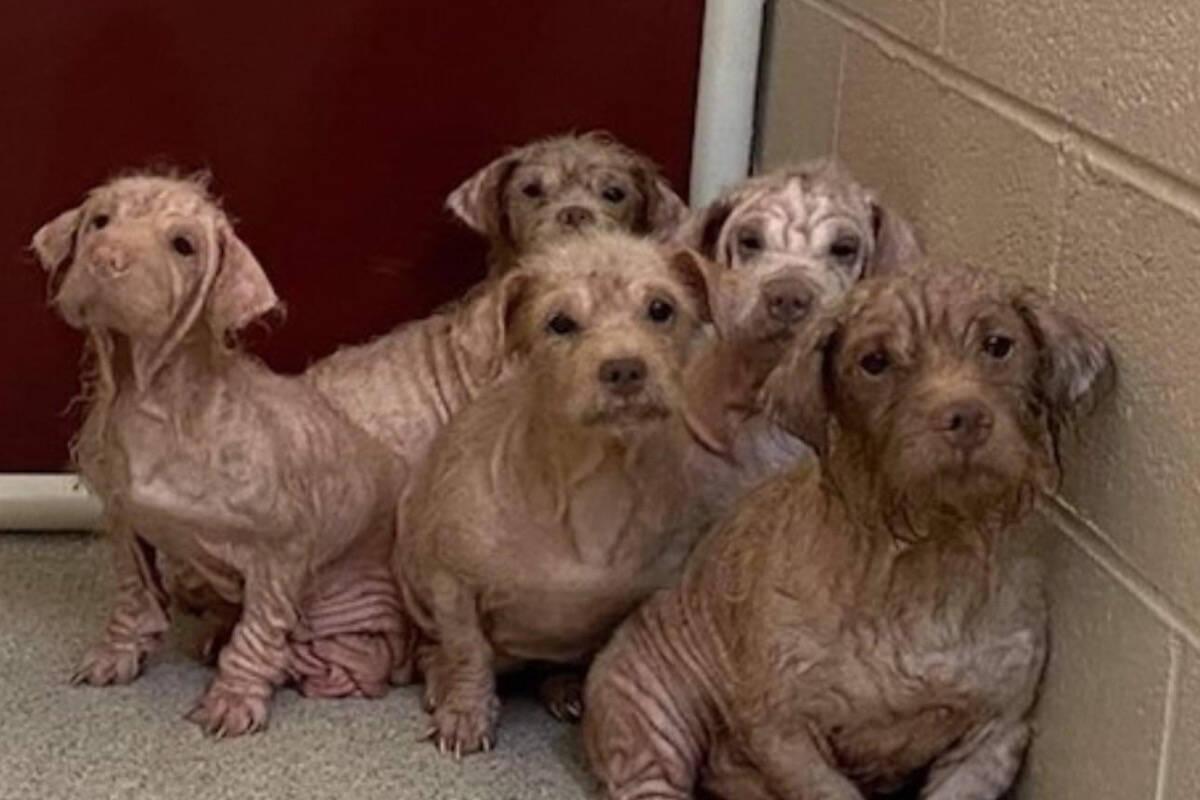 Abrigo recolhe 11 cães debilitados que viviam com o dono em um carro