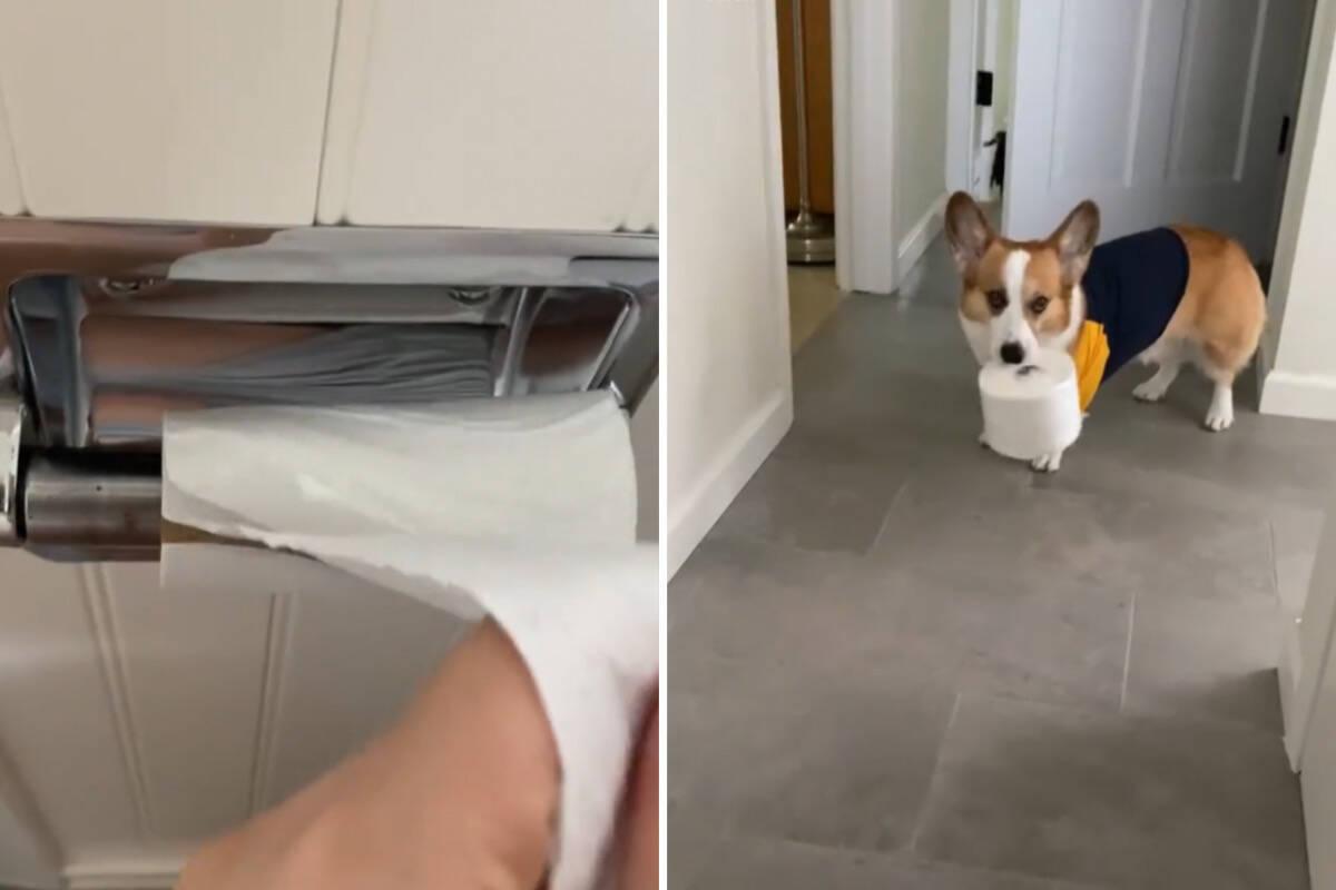 Vídeo: papel higiênico acaba, mas mulher não se aperta; sua cachorrinha traz outro rolo