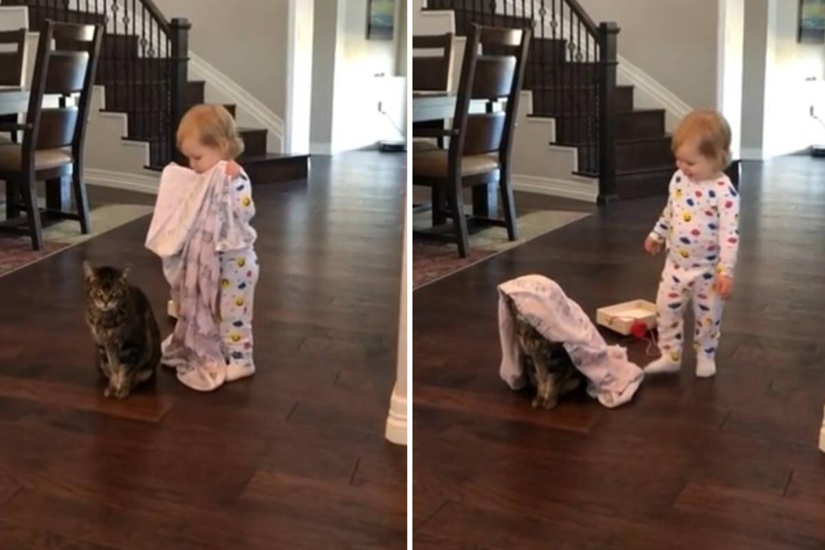 Vídeo viral: bebê joga cobertor sobre gato surpreendentemente paciente