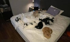 Para fugir do furação Ida, dona voa com seus 8 gatos