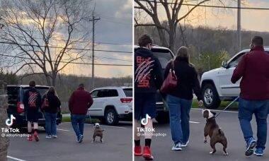 Vídeo: Cadela de abrigo percebe que ganhou uma nova família e quebra a internet