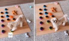 Vídeo: cachorrinho 'fala' para a dona que quer brincar e viraliza