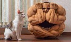 Designers japoneses criam a mais musculosa (e assustadora) casinha de gato
