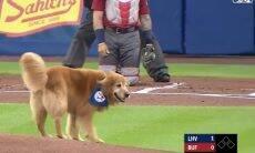 Vídeo: cachorro interrompe jogo de beisebol nos EUA e ninguém reclama