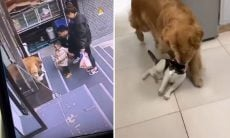 Vídeo viral: dona pede, e cão traz o gato de volta pra dentro da loja