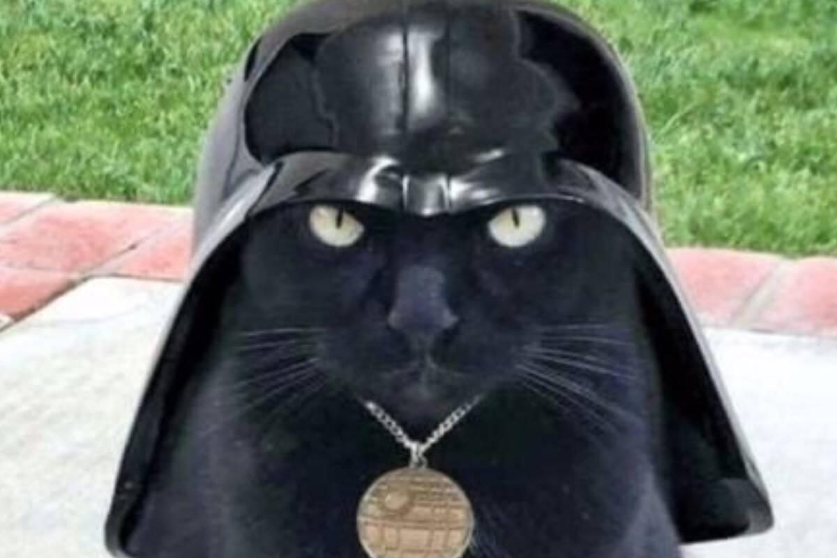 """Mark Hamill, o Luke Skywalker de 'Guerra nas Estrelas', reage ao ver 'Gato Vader"""""""