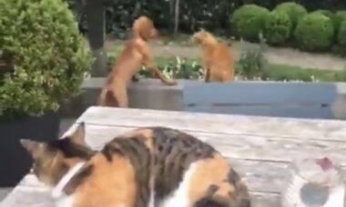 Vídeo: Para proteger o 'seu' cão, gato agride colega de espécie