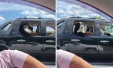 Vídeo: cachorro viaja no banco de trás do carro do jeito mais humano possível