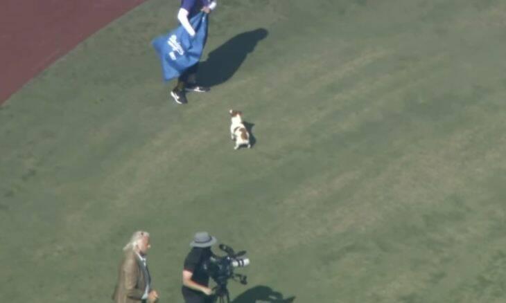 Vídeo: cãozinho bate recorde mundial de volta mais rápida em campo de beisebol