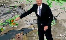 Cachorro invade estúdio de TV, pede comida e interrompe boletim do tempo