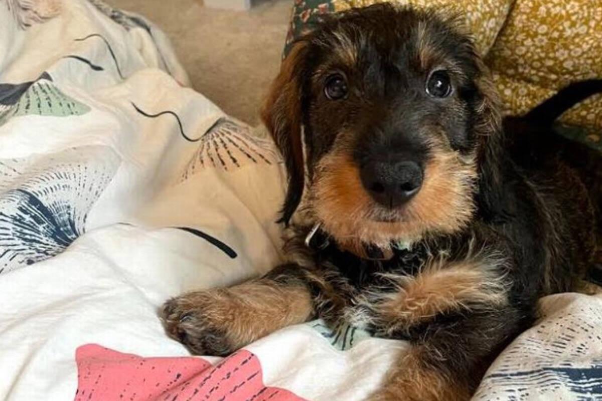 Dona 'vende tudo' para dar novas pernas ao seu cãozinho
