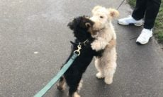 Cãozinho abraça seus amigos durante os passeios e encanta a internet